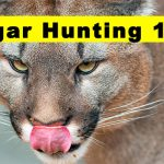 hooking up with cougars